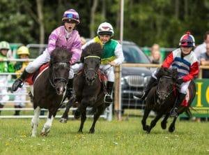 Shetland Pony Derby